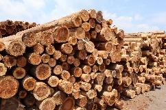合法木材供給事業者認定